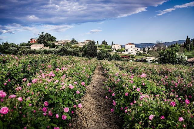 Jardim Dior  na França
