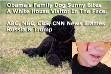 Media lies about Russia hacking, Obama dog Sunny bites friend