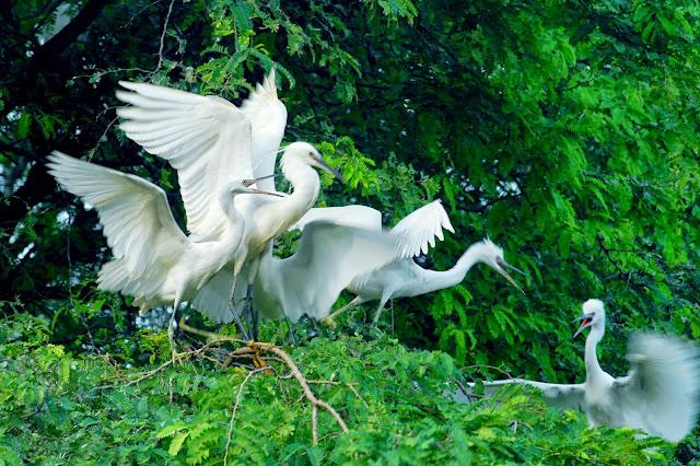 Nông trại du lịch sân chim Vàm Hồ