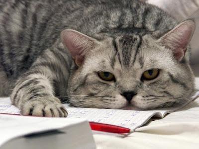 скучный кот