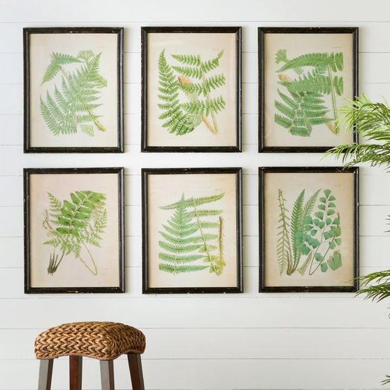 group of fern artwork hanging on wall