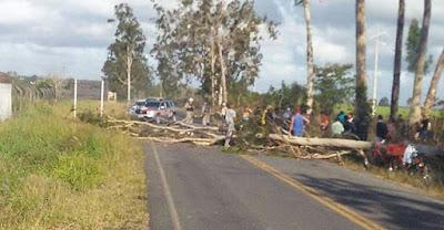 Em Sapé, árvore cai e mata idoso de 65 anos