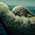 """O novo disco da Beyoncé, """"LEMONADE"""", já pode ser ouvido pelo Tidal"""