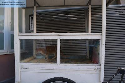 Έκλεισαν γατάκι σε... καροτσάκι κουλουρτζή στην Κατερίνη. (ΦΩΤΟ)