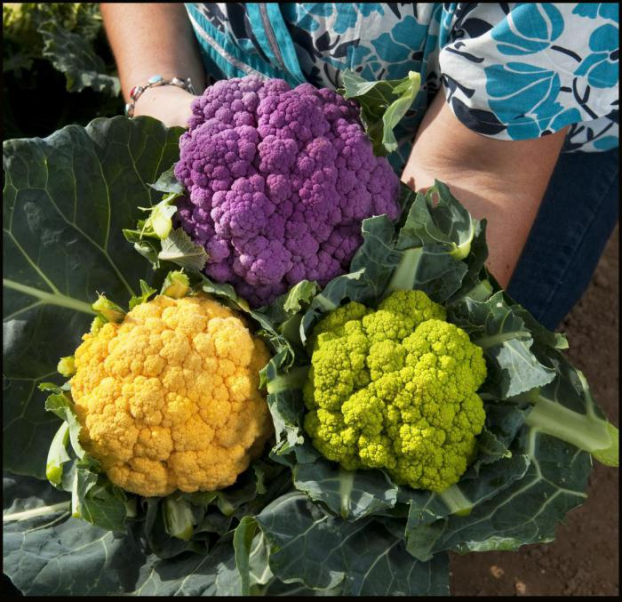 Why do you have to include cauliflower in your diet?