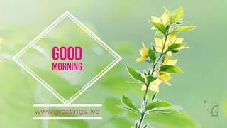 Small yellow flowers green leafs good morning wishes from www.greetings.live