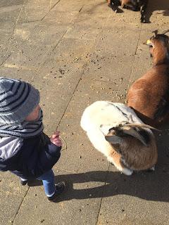 Das Kind füttert die zwei Ziegen im Wildpark Bad Marienberg