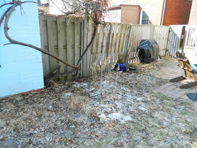 Spring Garden Cleanup Before in The Junction by Paul Jung Gardening Services a Toronto Gardening Company