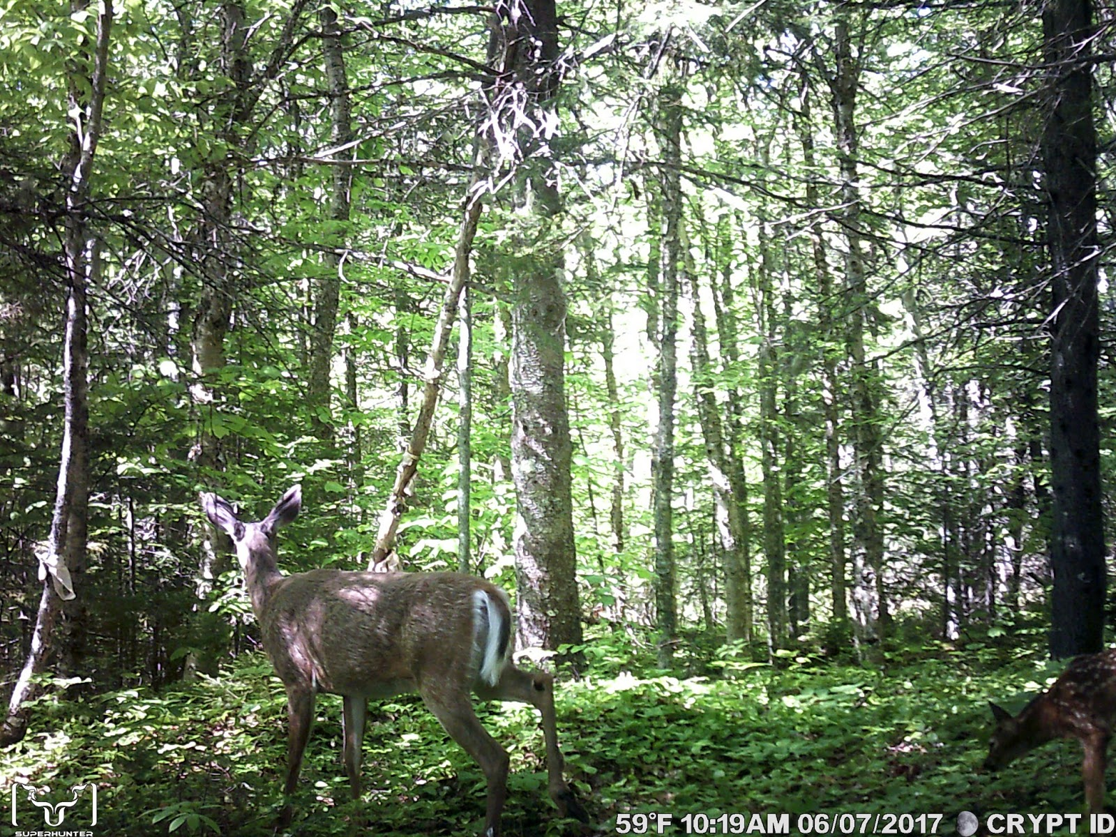 how to find trail cameras in the woods