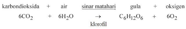 Reaksi Kimia Fotosintesis