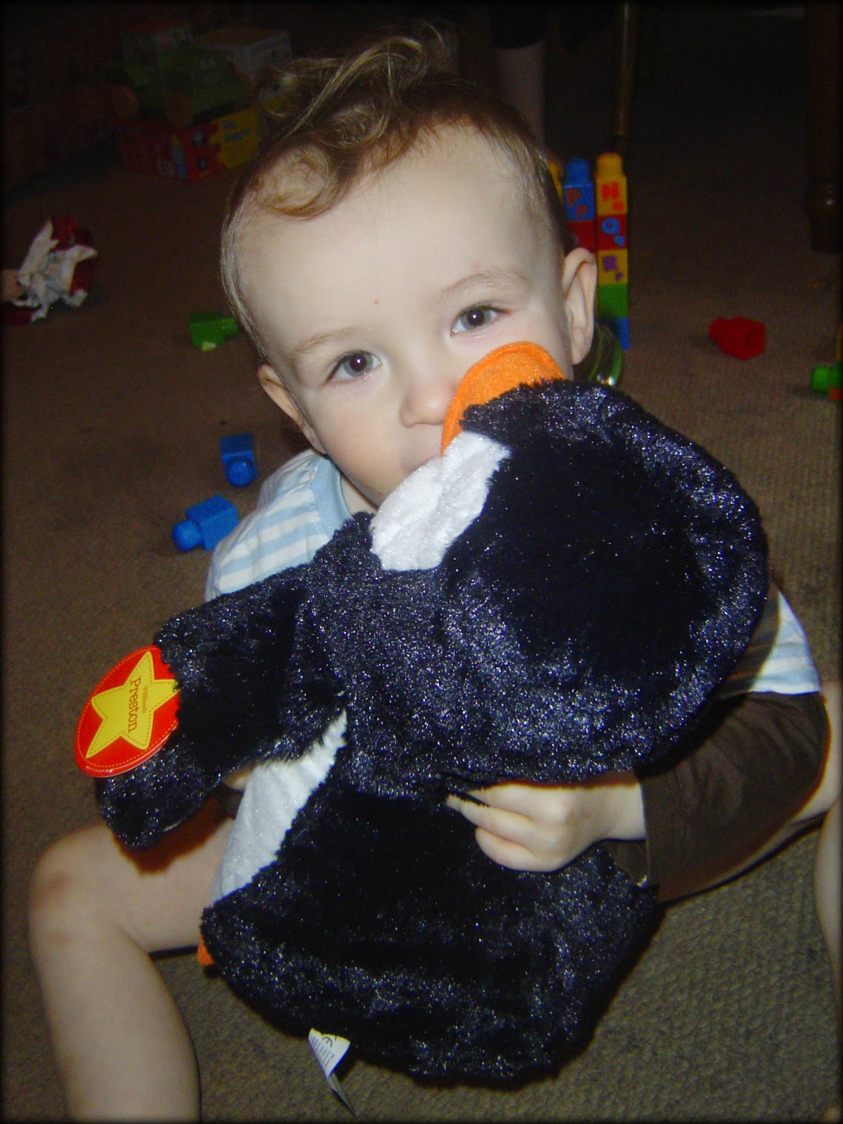 The Boy and his first penguin