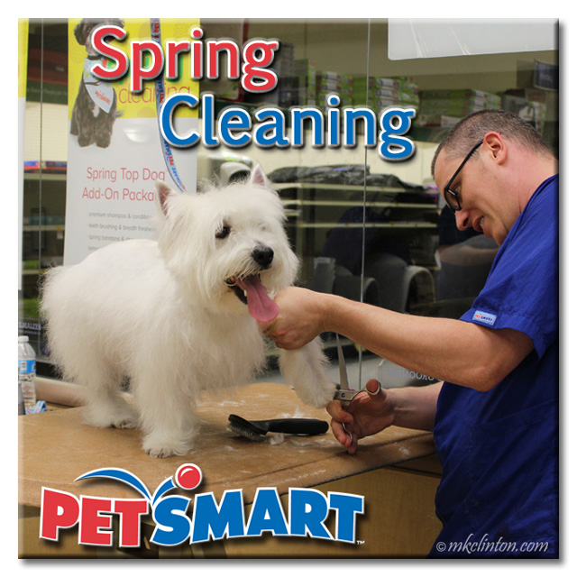 Male PetSmart Groomer trimming hair on Westie's feet