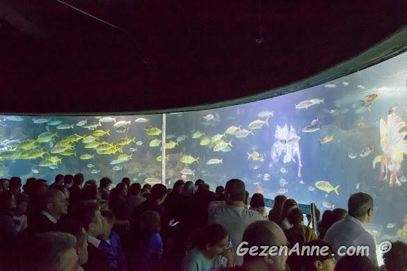 sarı sarı balık sürülerinin geçtiği panorama akvaryumu, Sea Life İstanbul