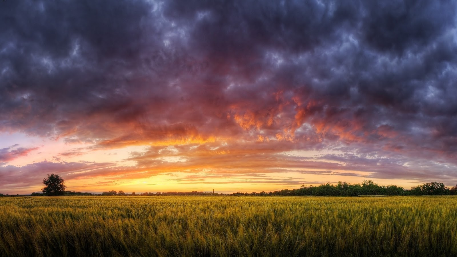 Amazing Sunset in grass field