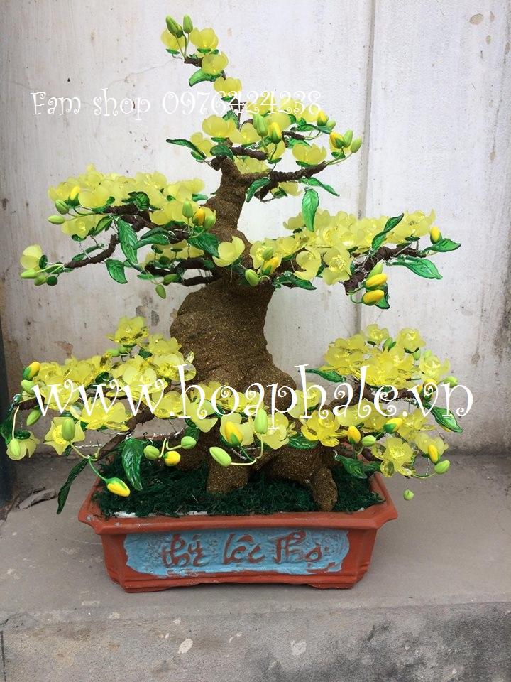 Goc bonsai mai dao the doi tai Nguyen Cong Tru