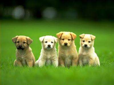 Από πότε ζούμε με τους σκύλους;