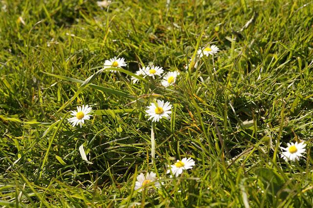 Spring in Norfolk