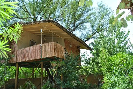 The Tree House Resort, Jaipur - Luxury Camping in Jaipur