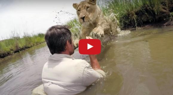 [video] 7 tahun Setelah Selamatkan Anak Singa, Mereka Bertemu Lagi dan reaksi singa tersebut sangat mengejutkan