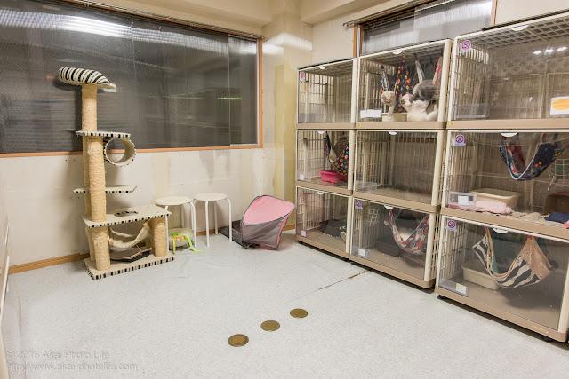 猫カフェ西国分寺シェルター、店内の部屋3つのうち2番目に大きい部屋の写真 一枚目