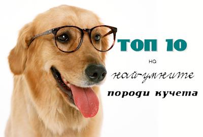 топ 10 най-умните породи кучета
