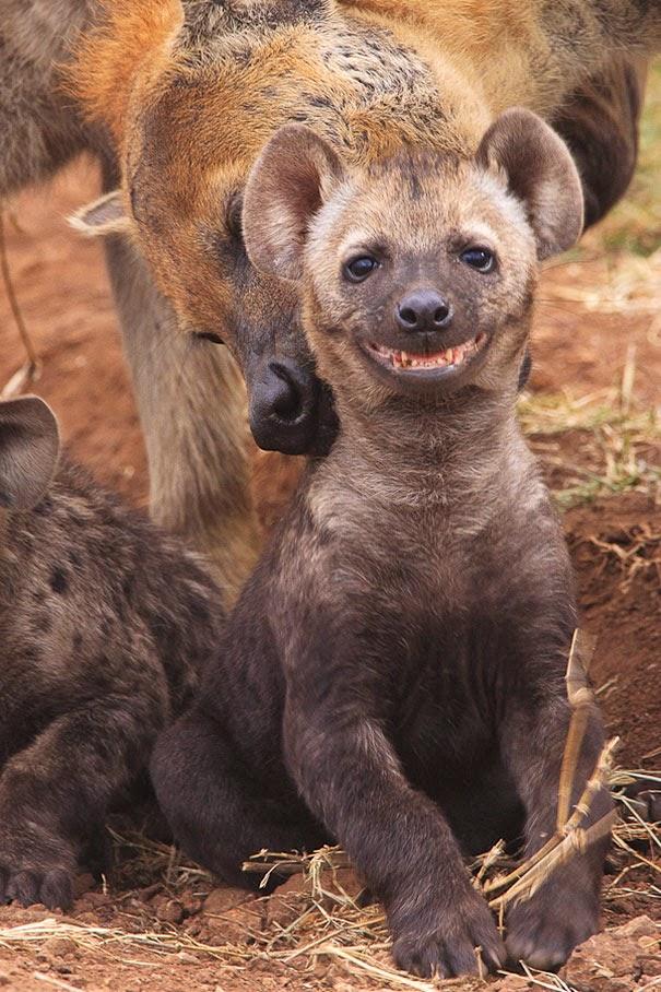 happy animals pictures 5