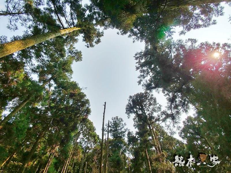 竹子湖黑森林(小溪頭)|陽明山婚紗熱門拍攝景點|仿如童話森林場景