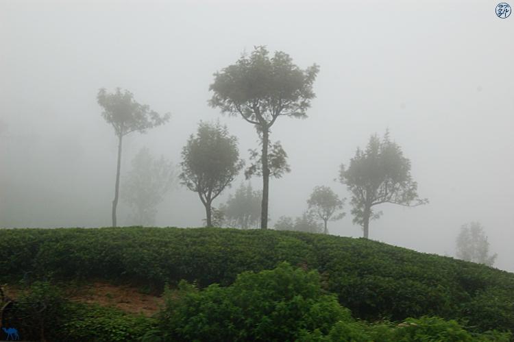 Le Chameau Bleu - Initiation aux thé Darjeeling avec Mariage Frères Paris