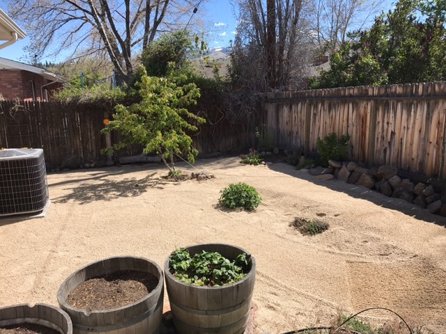 Backyard renovations after dg