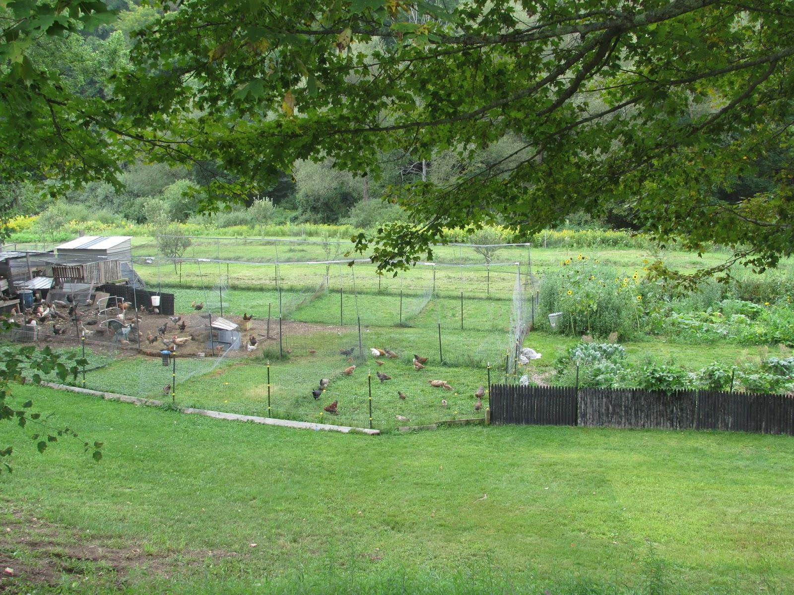 Modern homesteading for Modern homesteading