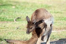 Kangaroo Island - An Australian Island Paradise