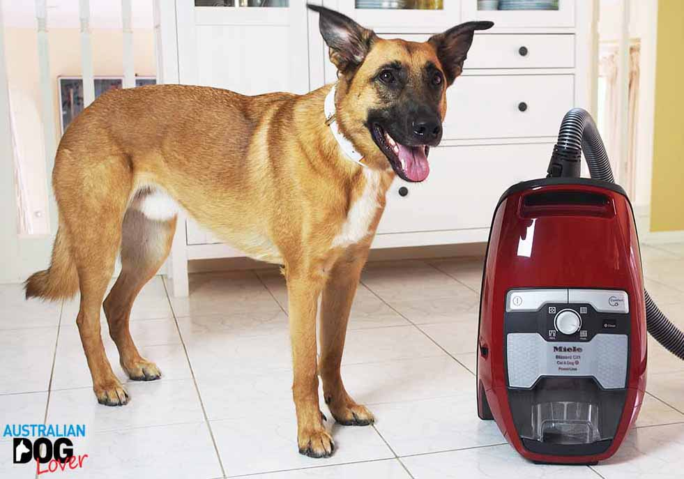 Miele Cx Cat And Dog Review