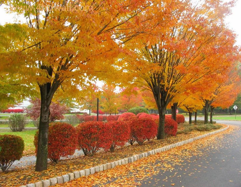Autumn Falling Leaves Wallpaper Garden Amazing Admirable Seasonal Wallpapers For Desktop