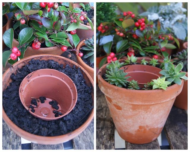 DIY Blumentöpfe ineinander schachteln mit Hauswurz bepflanzen