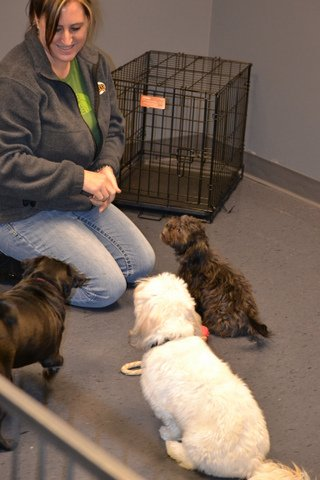 Image Result For Dog Training Classes Springfield Mo