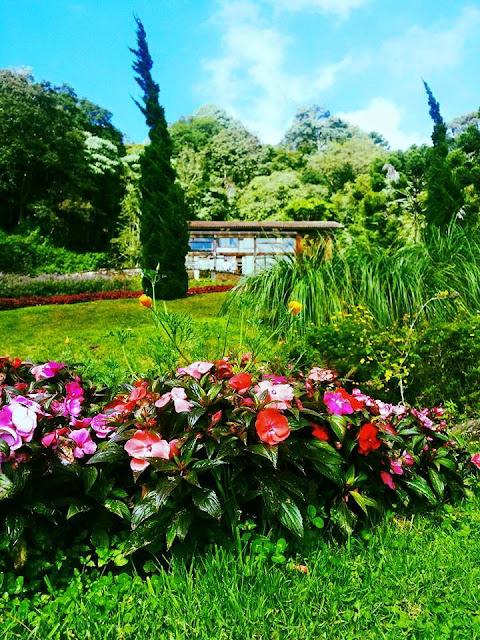 Campos do Jordão, jardins, flores,