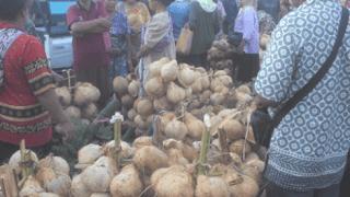 Potensi Buah Kelapa Kecamatan Ngadirojo Pacitan