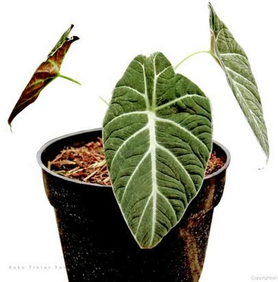 Cara pencahayaan tanaman