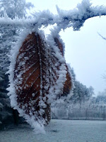 Leaf covered in frost, hanging from a branch