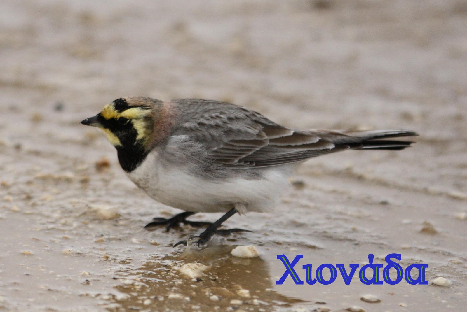 Ωραίο σκληρό πουλί