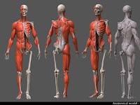 Anatomi Nedir? Anatomi Ne Değildir?