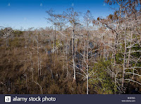 Dead trees and grasses at Everglades National Park, Florida, US, 18/12/2016. (Credit: Phil Degginger / Alamy Stock Photo) Click to Enlarge.