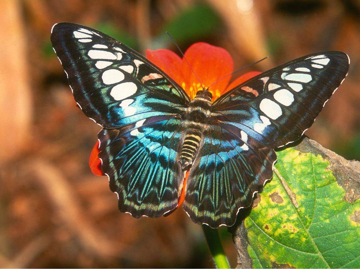 Imagenes De Mariposas De Colores: MARIPOSAS