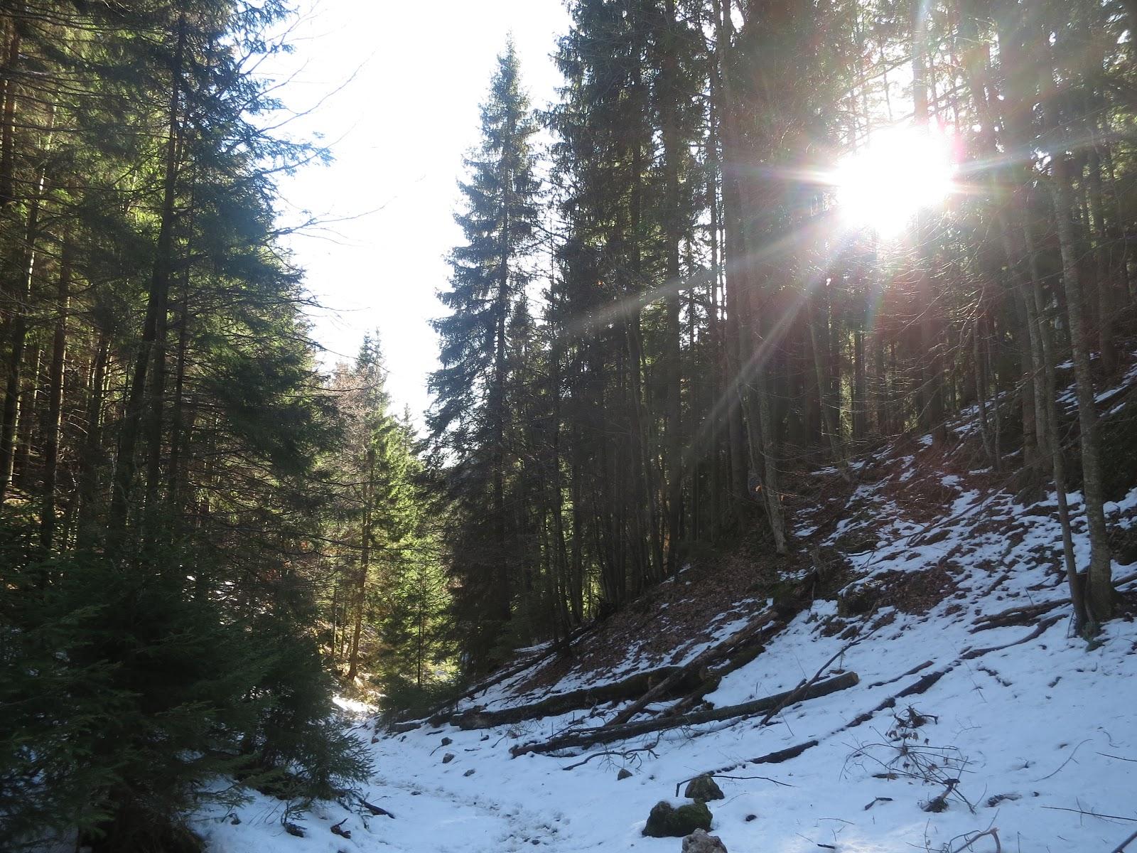 Fliederbaum: gestern im Sonnenschein...