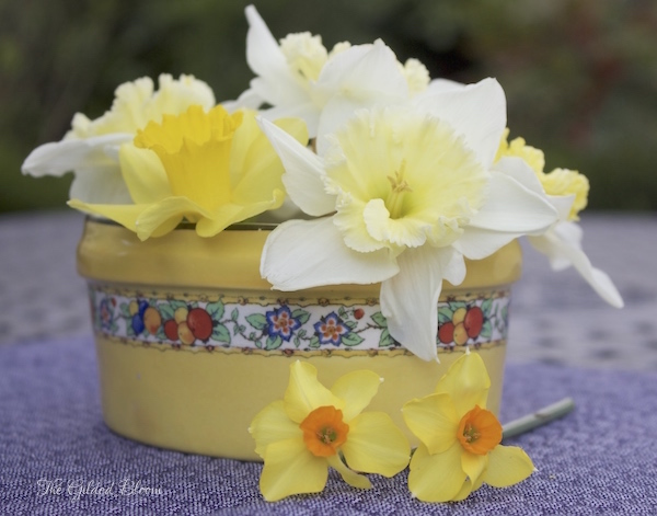 Daffodils in Statement Containers- www.gildedbloom.com