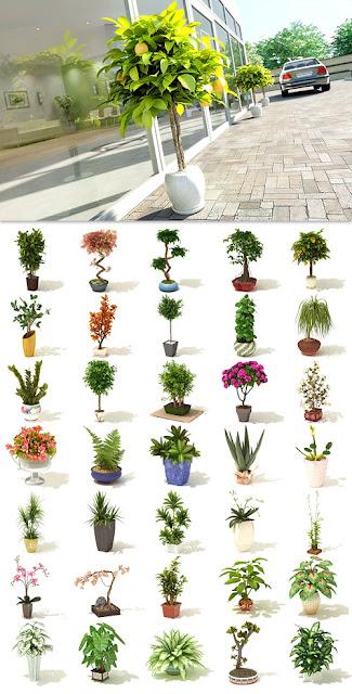 FREE 3D MODEL AND GRAFFICS: Archmodels Vol 41 - Realistic Plants