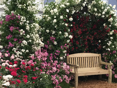 Pic of June roses around bench at Chelsea Flower Show, London 2017
