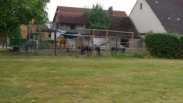 Nachbars Pferde beim Abendessen (c) by Joachim Wenk