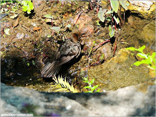 Dallas Arboretum & Botanical Garden: Aves