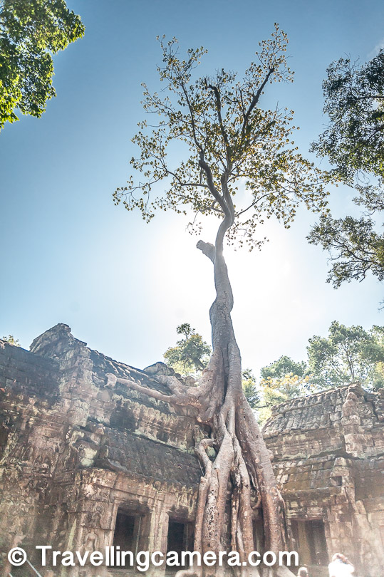 Just look at this huge tree which has wrapped around the temple and try to imagine how old this tree would be. That would give us a sense about the time for which these temples on their own in this cruel forest.